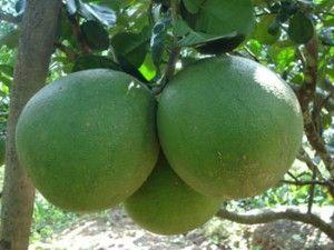 Cách phân biệt trái cây ngâm hóa chất