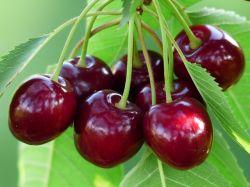 Cherry Newzealand nên mua ở đâu tại thành phố Hồ Chí Minh?