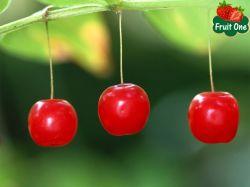 Cherry Úc trên thị trường Tp HCM