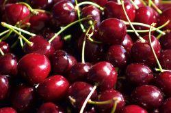 Cùng FruitOne tìm hiểu về mùa cherry New Zealand