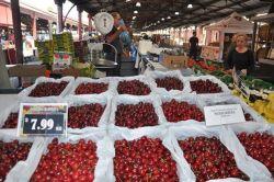 Dân sành rủ nhau ăn cherry ngoại