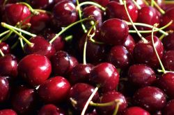 Mùa Cherry New Zealand với FruitOne