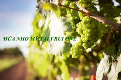 Mùa Nho Mỹ tại Fruit One