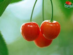 Mua trái cherry ở đâu TPHCM để làm quà tặng