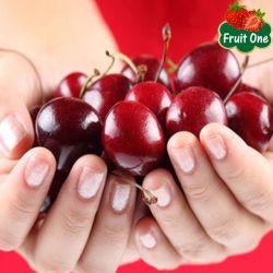Kĩ thuật trồng và thu hái Cherry New Zealand