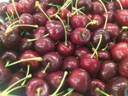 Quy trình thu hoạch cherry New Zealand