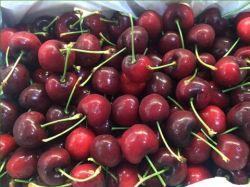 Trái Cherry Úc chính thức được vào Việt Nam